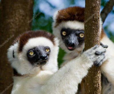 Tour in Madagascar